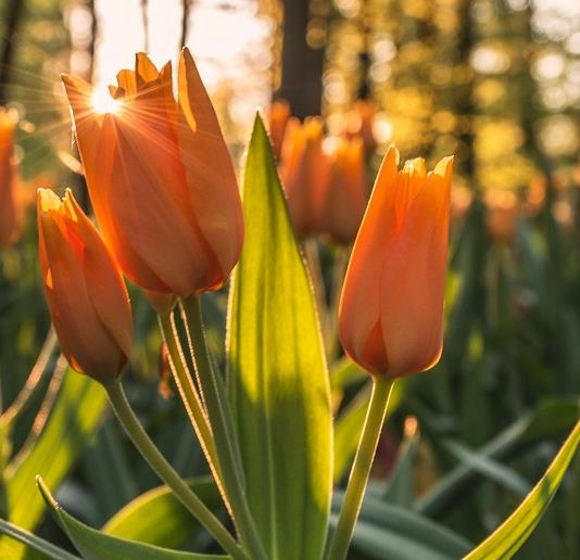 Five things in nature to lift your mood