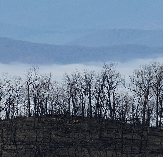 Mental health and personal safety in the face of the bushfire crisis