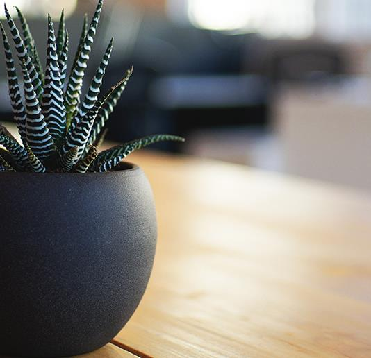 How nature in the office can improve your wellbeing