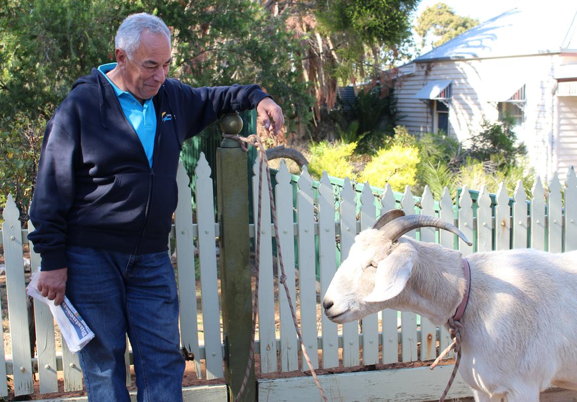 Meeting Gary the Goat in Ouyen.