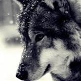 Yana8216 avatar