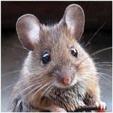 QldMouse avatar