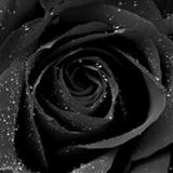 Sapphire* avatar