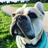 Robbie A avatar