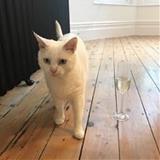 21cats  avatar