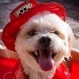 A small white dog avatar