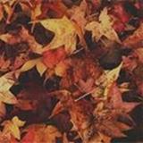 autumn.red avatar