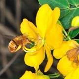 Mariasharapovafan1 avatar