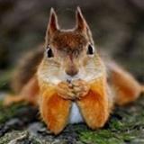 Squirrell avatar