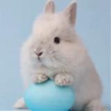 SarahZ avatar