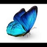 Blue_butterfly83 avatar