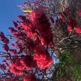 KyuShu_sup avatar
