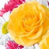 topsy_ avatar
